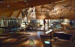 Im Museum von Longyearbyen