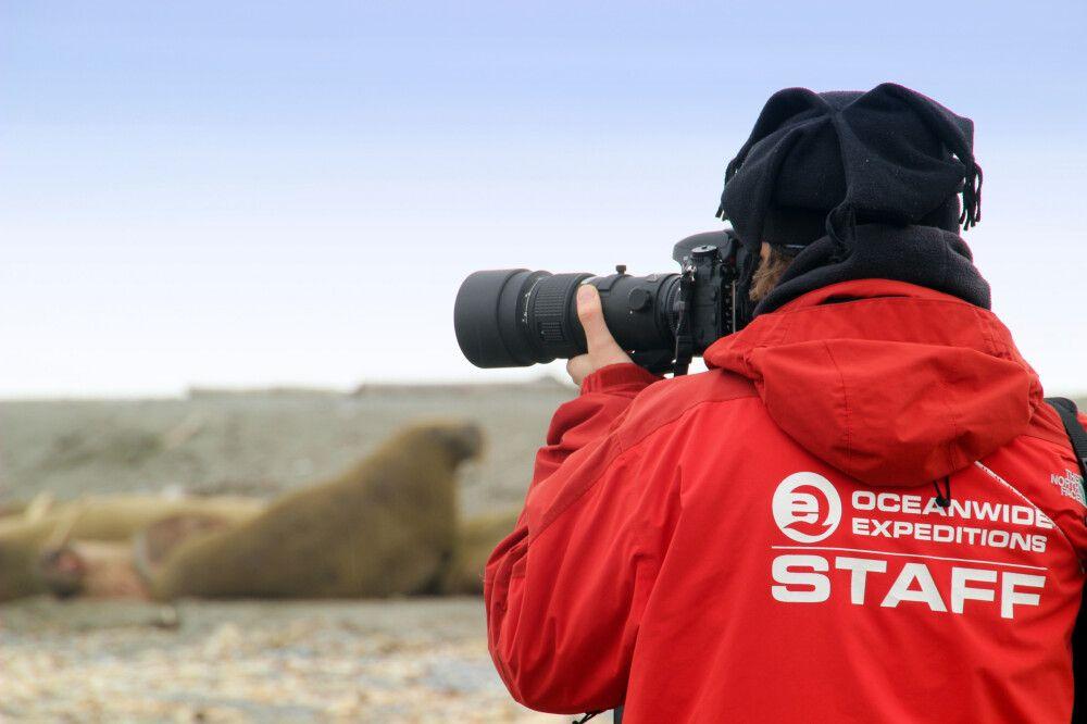 Fotografieren bei den Walrossen