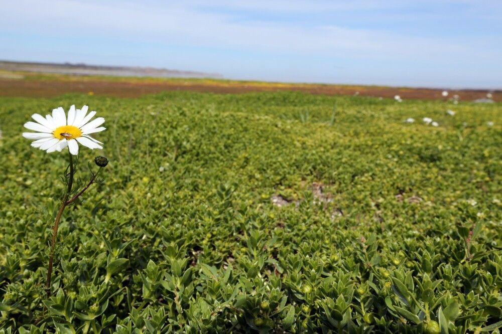Blumen und üppig grüne Wiesen in Churchill