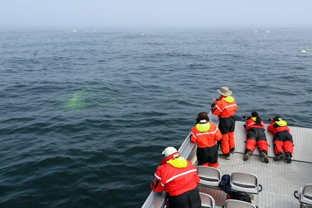 Arbeitsbedingungen bei der Belugafotografie