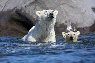 Mutter mit Jungtier