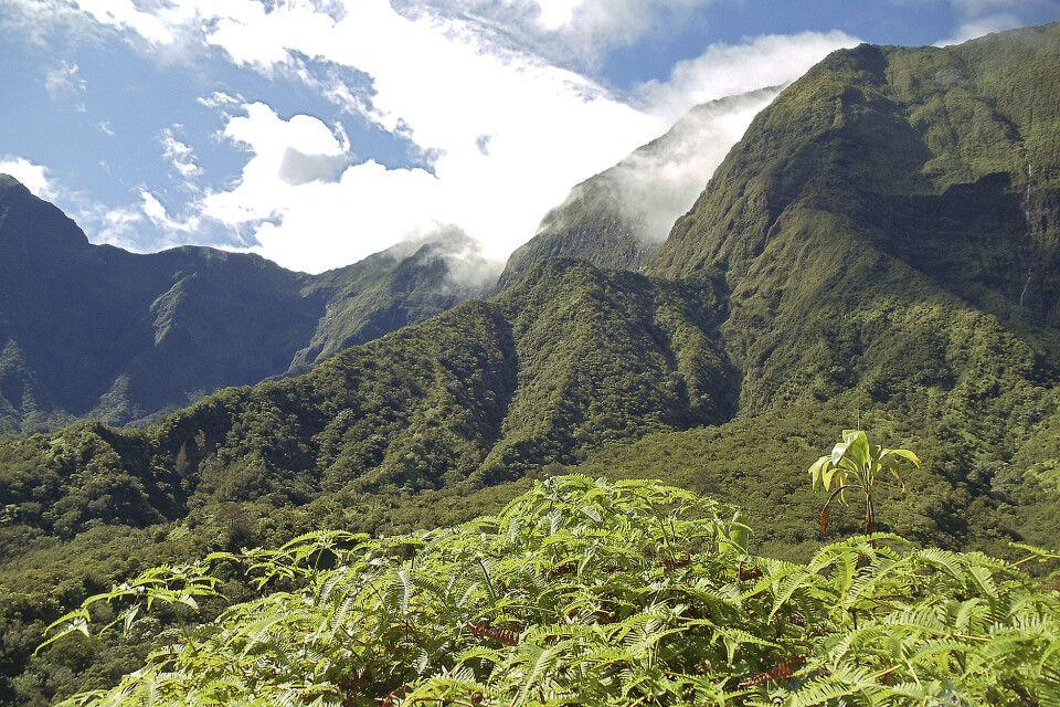 Das Innere der Vulkaninsel ist überbordend grün