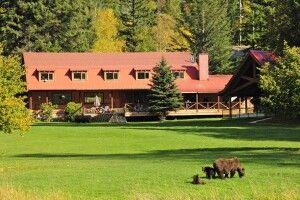Bären direkt in der Umgebung der Lodge