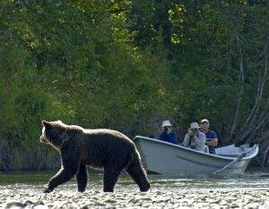 Bärensafari von der Lodge aus