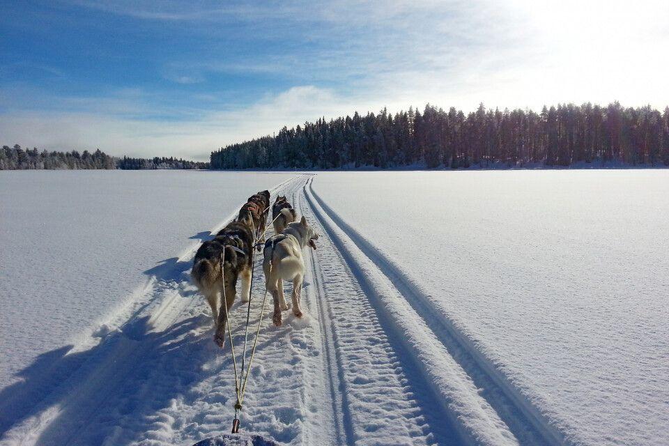 Durch das winterliche Lappland