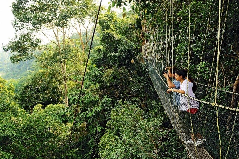 Canopy Walk – Taman Negara