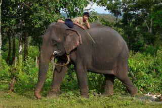 Elefant mit Mahut in der Provinz Mondulkiri