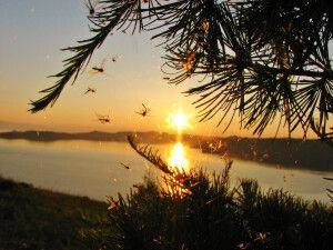 Abendstimmung am Baikal
