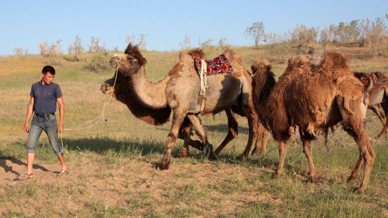 Seidenstraßenfeeling beim Kamelritt in der Wüste © Diamir