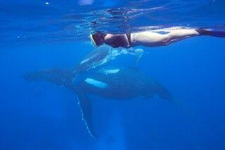 Schnocheln mit Buckelwalen