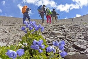 Aufstieg von Nimaling zum Kongmaru La (5130m)
