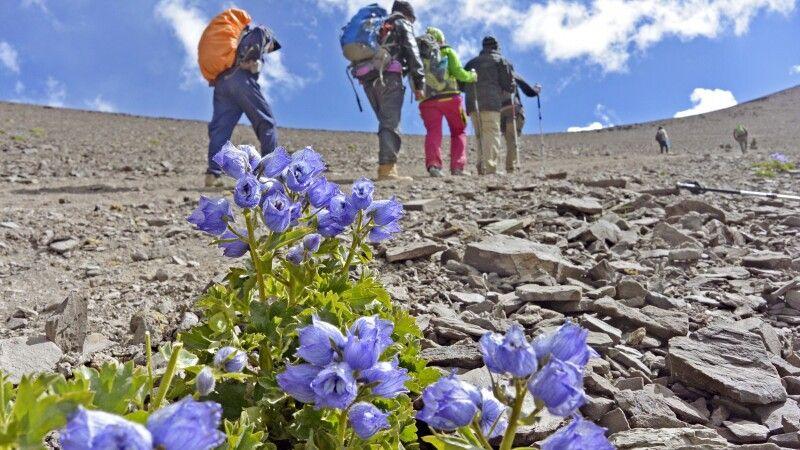 Aufstieg von Nimaling zum Kongmaru La (5130m) © Diamir