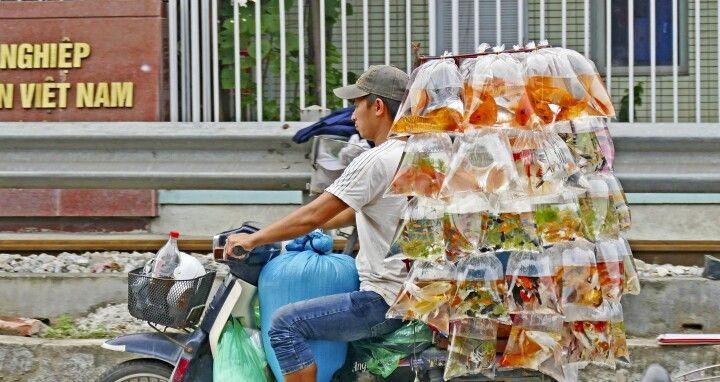 Voll beladenes Moped in der Altstadt von Hanoi
