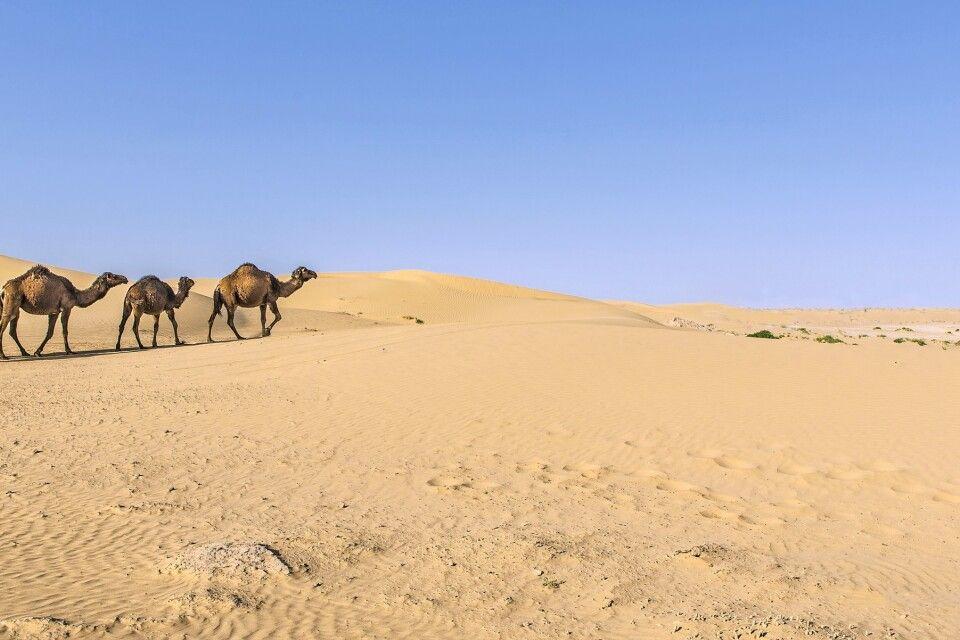 Kamele vor Oase