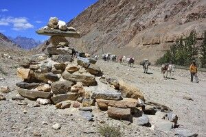 Markha Valley Trek, Etappe Markha-Thachungtse, Begleitmannschaft mit Pferden