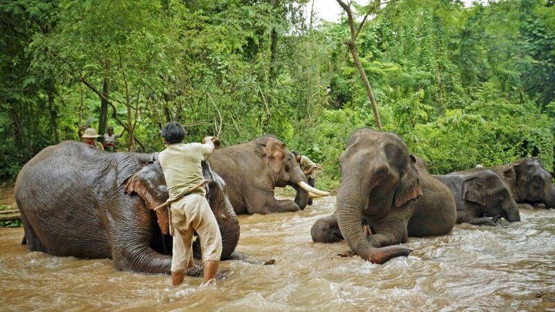 Im Elefantencamp © Diamir