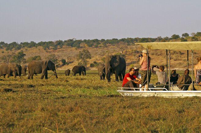 Chobe: Bootsfahrt zu den Elefanten