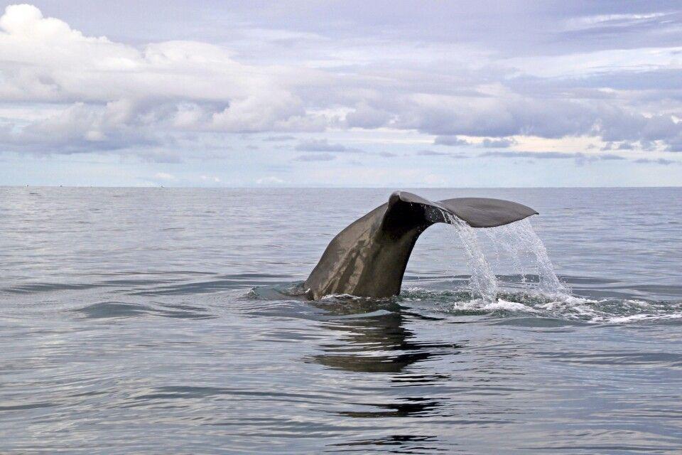 Whale watching Kalpitiya