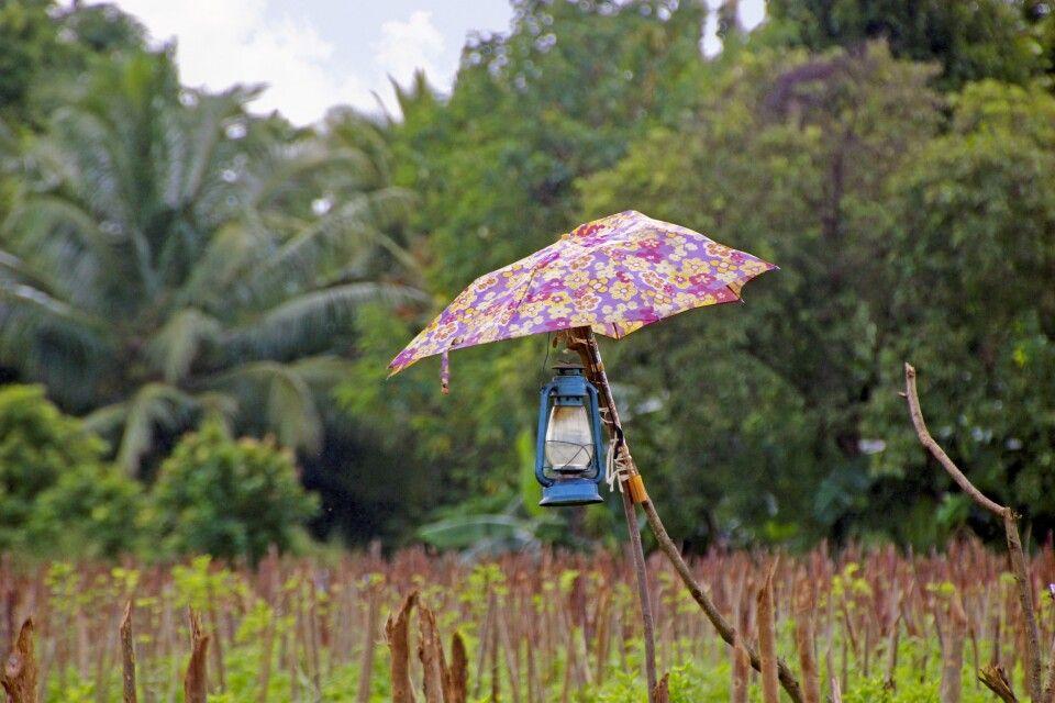 Auf einer Wanderung in der Umgebung von Sigiriya