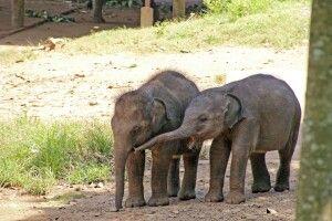 Udawalawe Babyelefanten