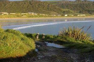 Die seltenen Gelbaugenpinguine in der Curio-Bay. Südinsel