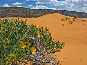 Schöne Sanddünen mitten in der Landschaft