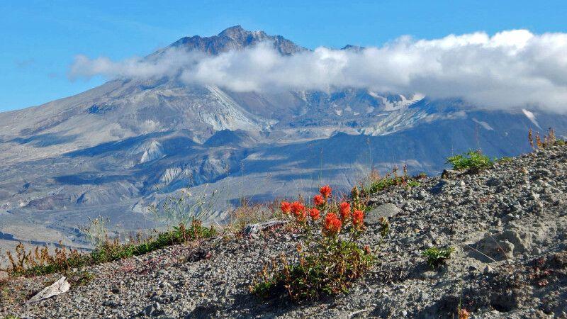 Das Überbleibsel des einst gewaltigen Vulkans Mount St. Helens © Diamir
