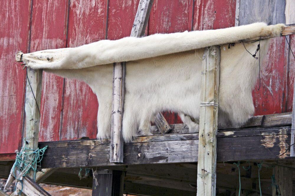 In Ittoqqortoormiit wird noch traditionell gejagt, die meisten Einwohner sind Inuit
