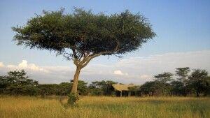 Blick auf das gut getarnte Naboisho Camp