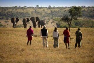 Auf Safari zu Fuß
