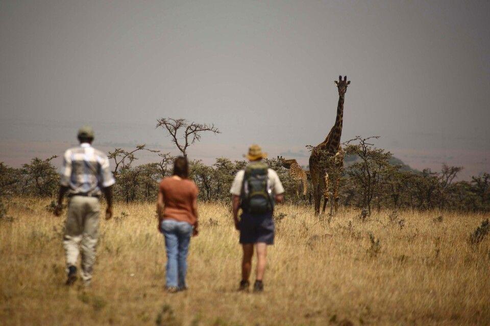 Auf Safari zu Fuß vom Naboisho Camp aus