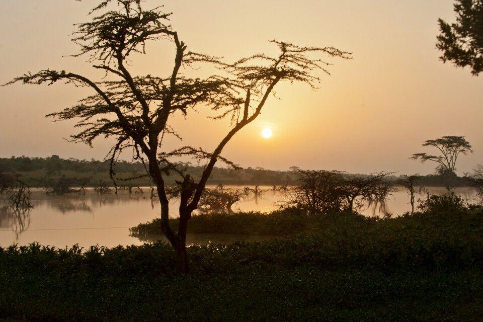 Dämmerung in der kenianischen Wildnis