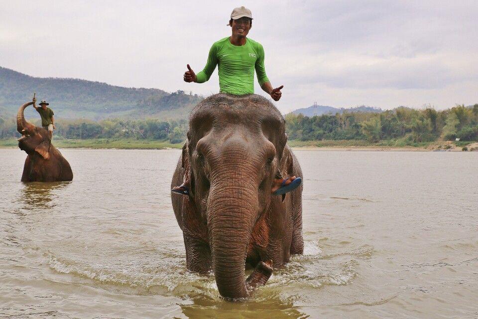 Elefanten beim Baden im Mekong