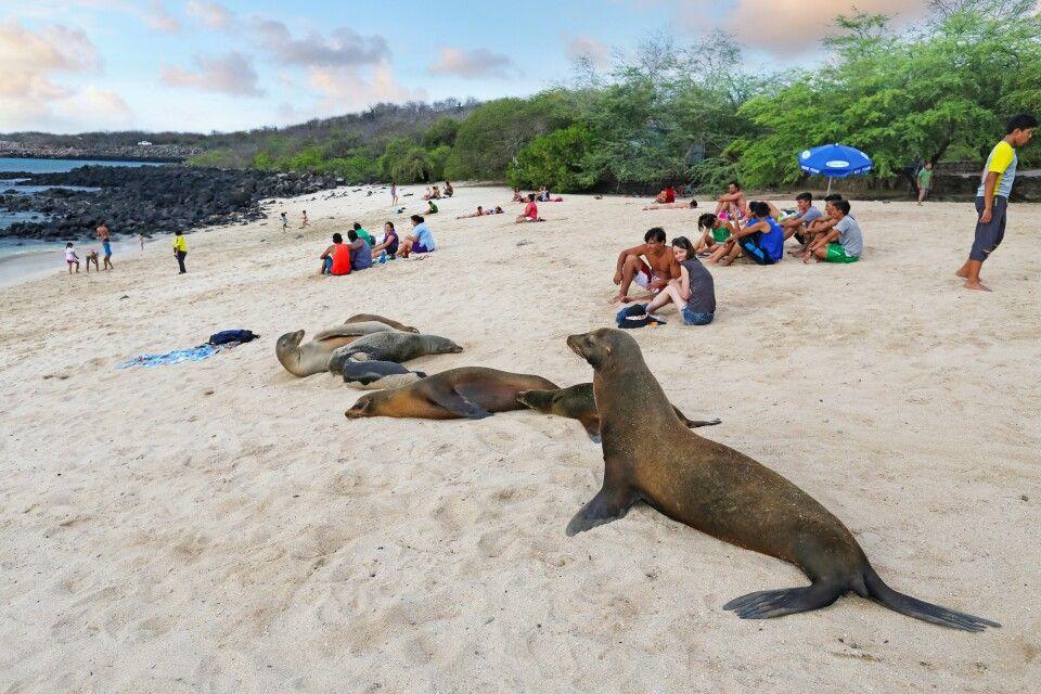 Ein Badestrand für alle! Neben den Badegästen sind auch Seelöwen unter den Sonnenanbetern am Strand anzutreffen.