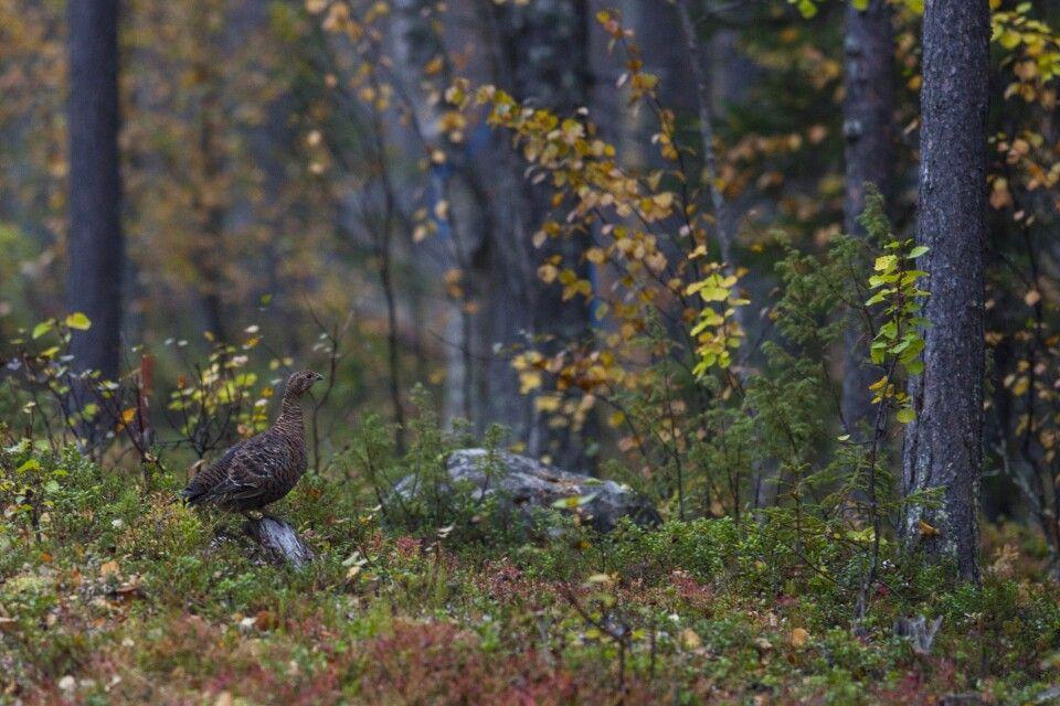 Tierbeobachtung im Herbstwald