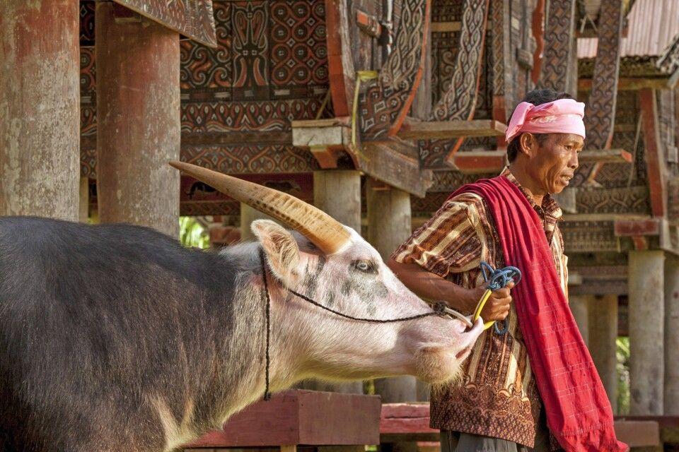 Mann mit Büffel im Dorf