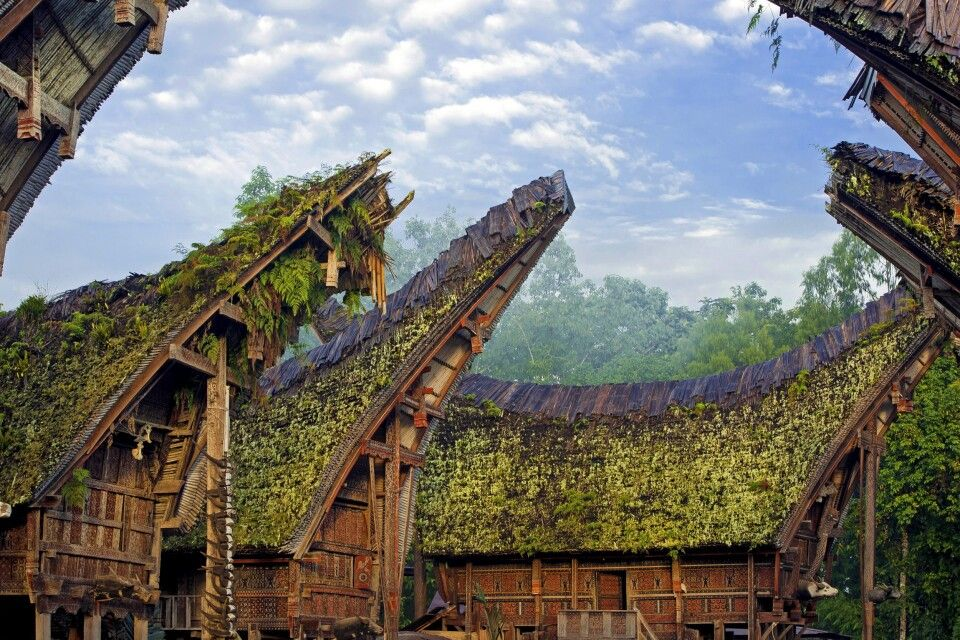 Tongkonan-Häuser in Toraja