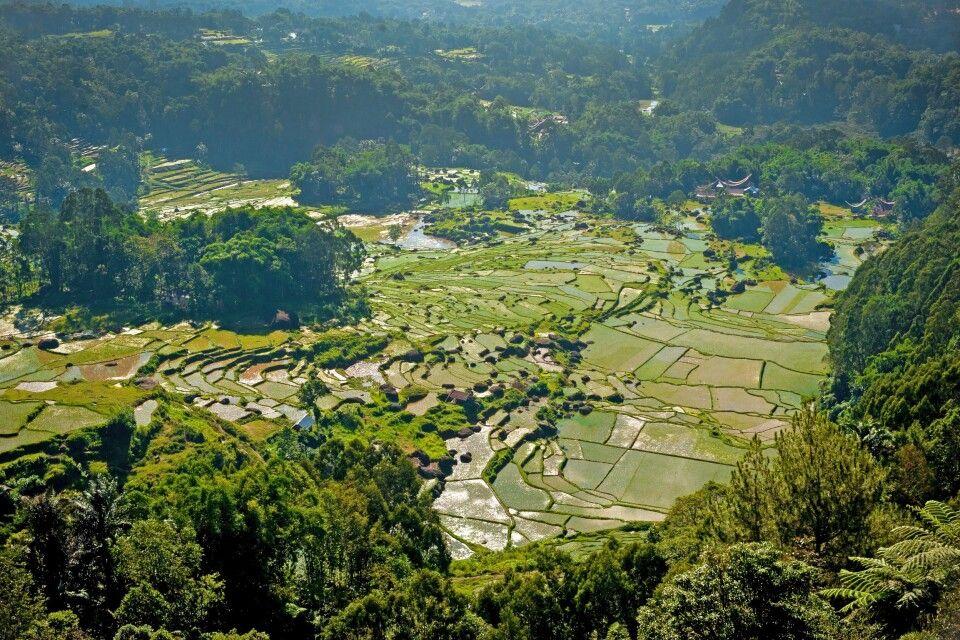 Reisfelder im Herzen Sulawesis