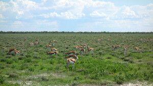 Auf Pirsch im Etosha-Nationalpark
