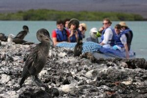Zodiak mit Galapagoskormoran