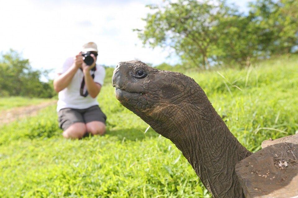 Schildkröten kann man hier aus allen Lagen, Blickwinkeln, Standpunkten fotografieren und bestaunen. Und die Zeit sitzt nicht im Nacken. Hier kann man ganztägig auch auf eigene Faust zum Fotografieren Zeit verbringen. Geheimtipp!