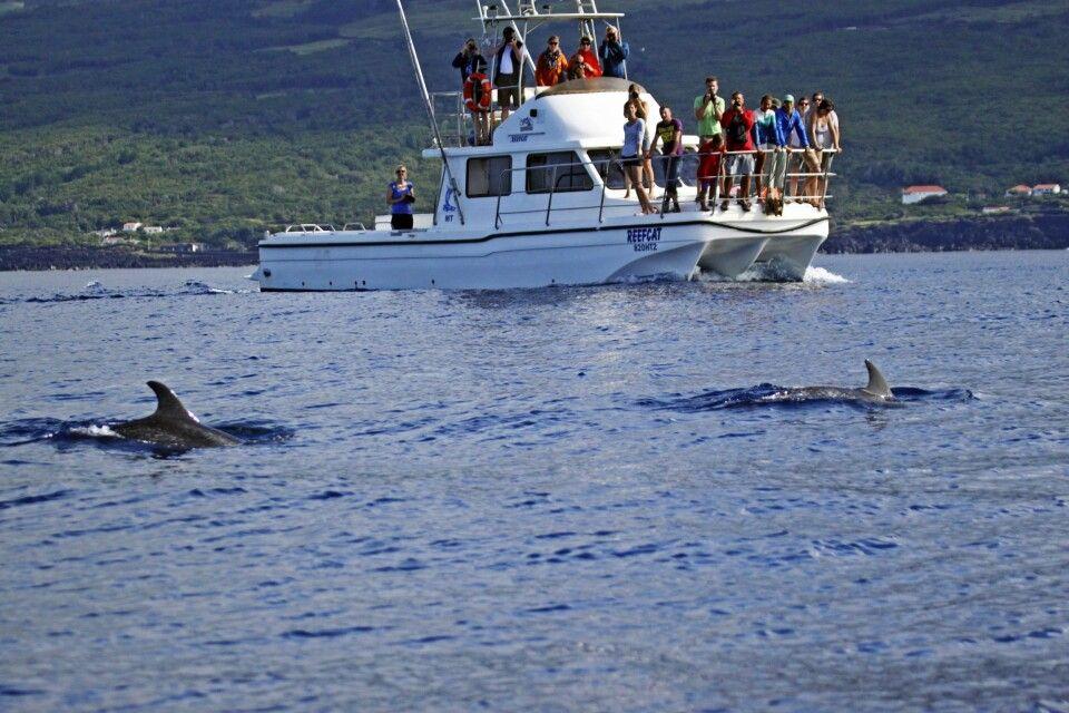 Walbeobachtung mit kleinen Booten