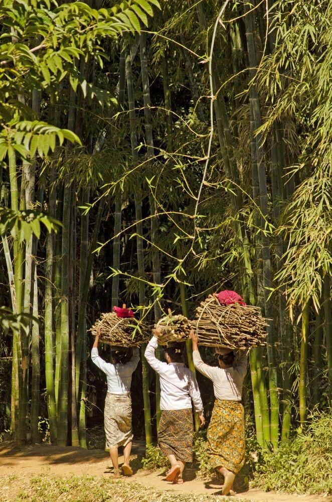Wanderung durch Bambuswälder am Inle-See