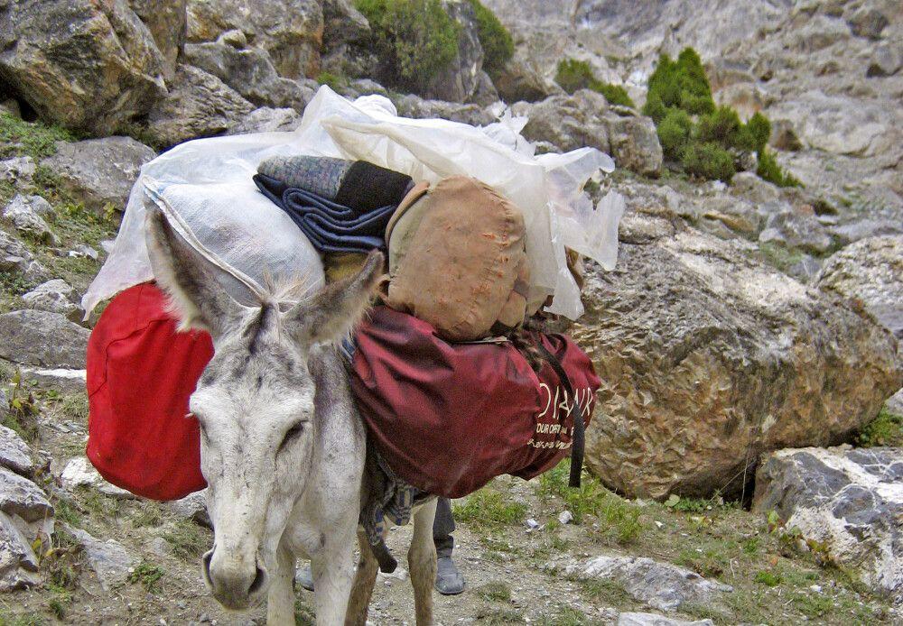 """Bis zum """"trüben See"""" wird das Gepäck durch Packesel getragen"""