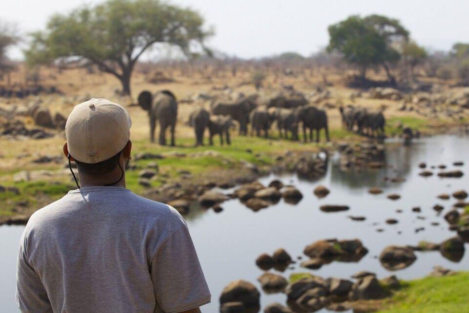 Eine Elefantenherde am Ruaha Fluss wurde entdeckt