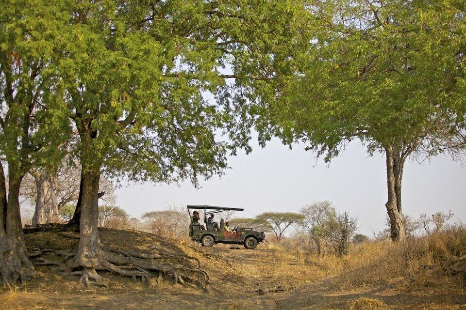 Auf Safari im Ruaha Nationalpark