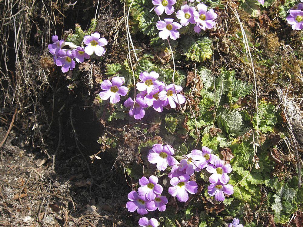 vielfältige Flora im Frühling