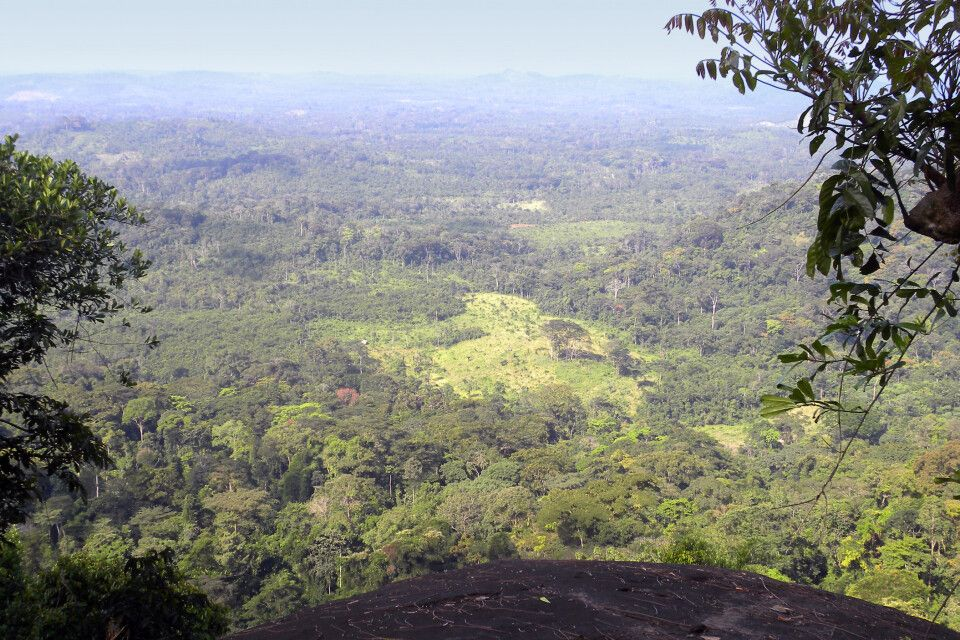 Gola Forest