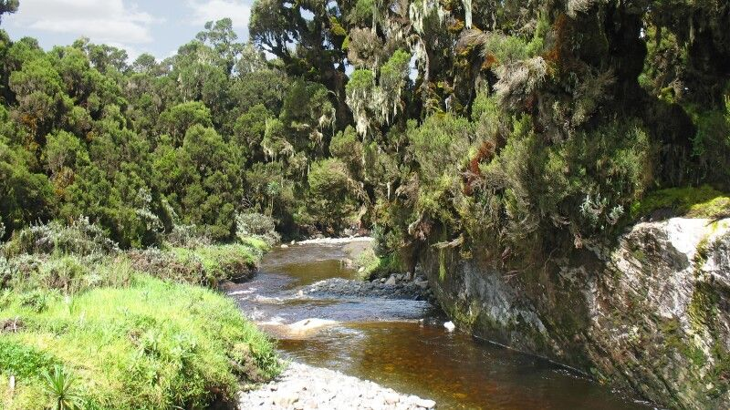 Mobuku Fluss Ruwenzori © Diamir