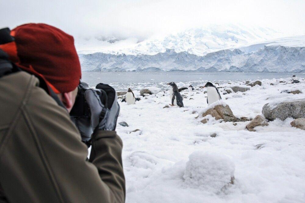 Fotografieren mitten in der Pinguinkolonie